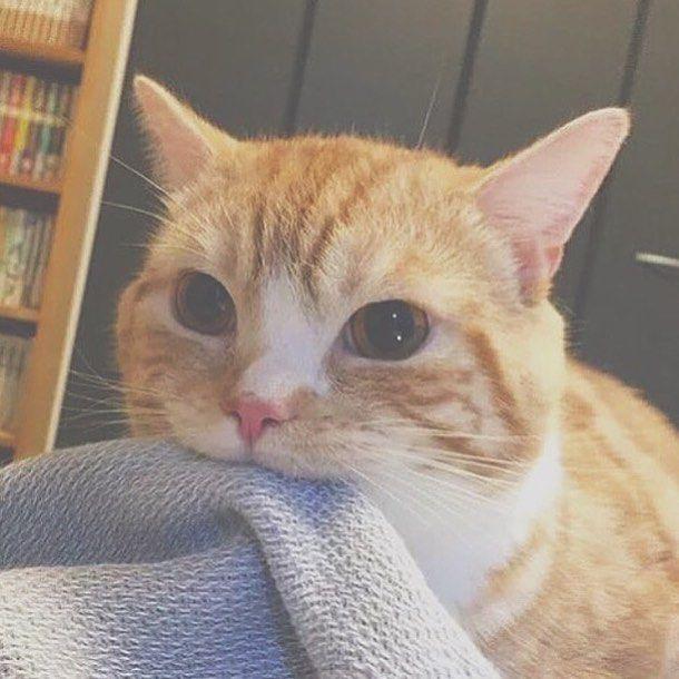 Cat Eating Sock