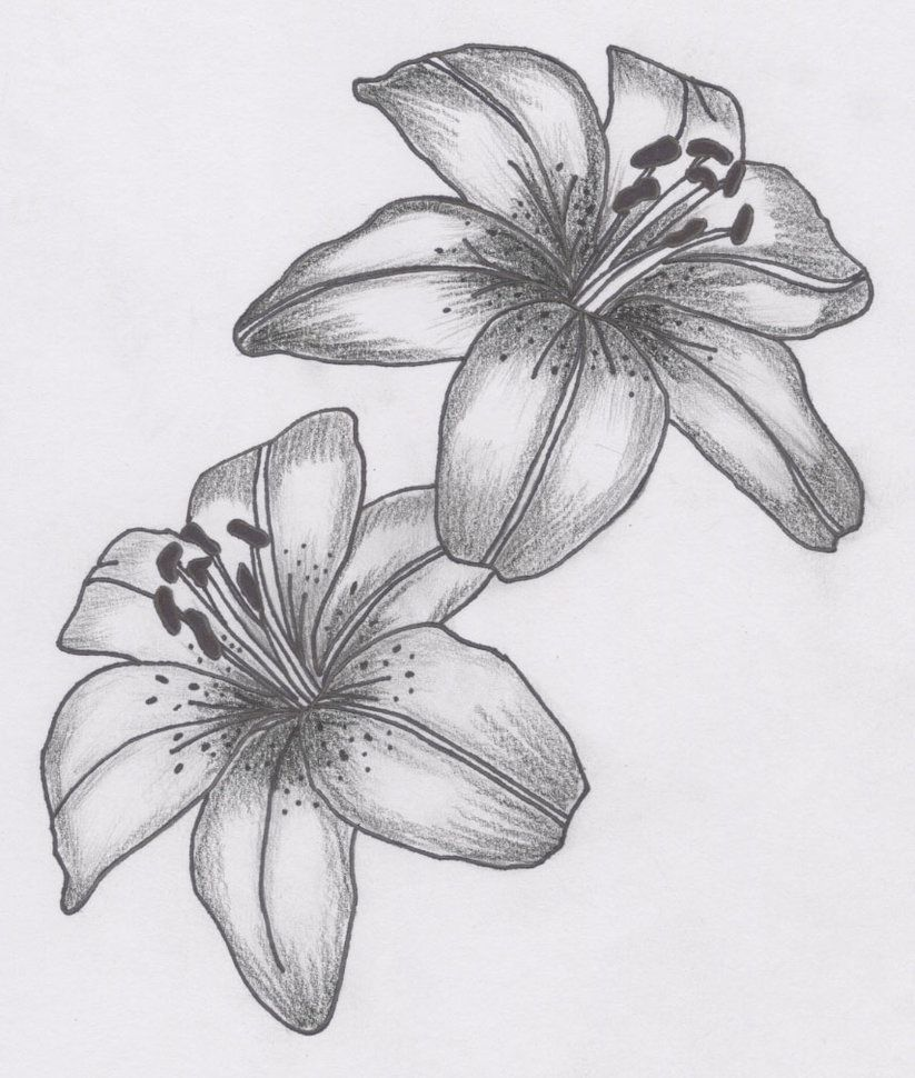 Tatto Flower Drawings For Tattoos Lily Flower Tattoo Designs Can