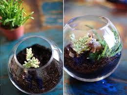 """Résultat de recherche d'images pour """"un jardin dans un bocal"""""""