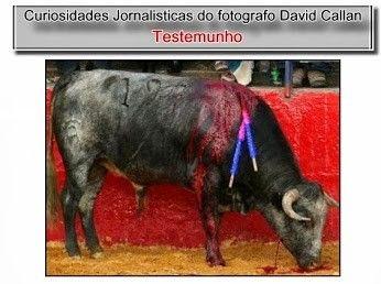 TESTEMUNHO DE UM FOTÓGRAFO QUE ASSISTIU A UMA TOURADA