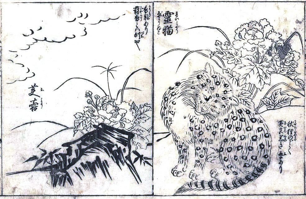 Animal cat leopard asian black and white japanese woodblock prints