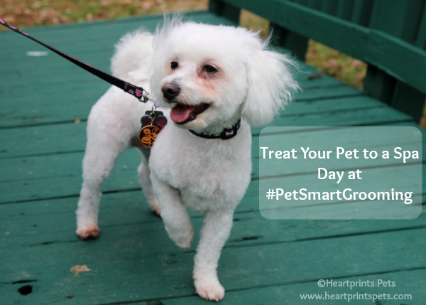 Treat Your Dog To A Spa Day At Petsmartgrooming Your Dog Petsmart Grooming Dog Groomers