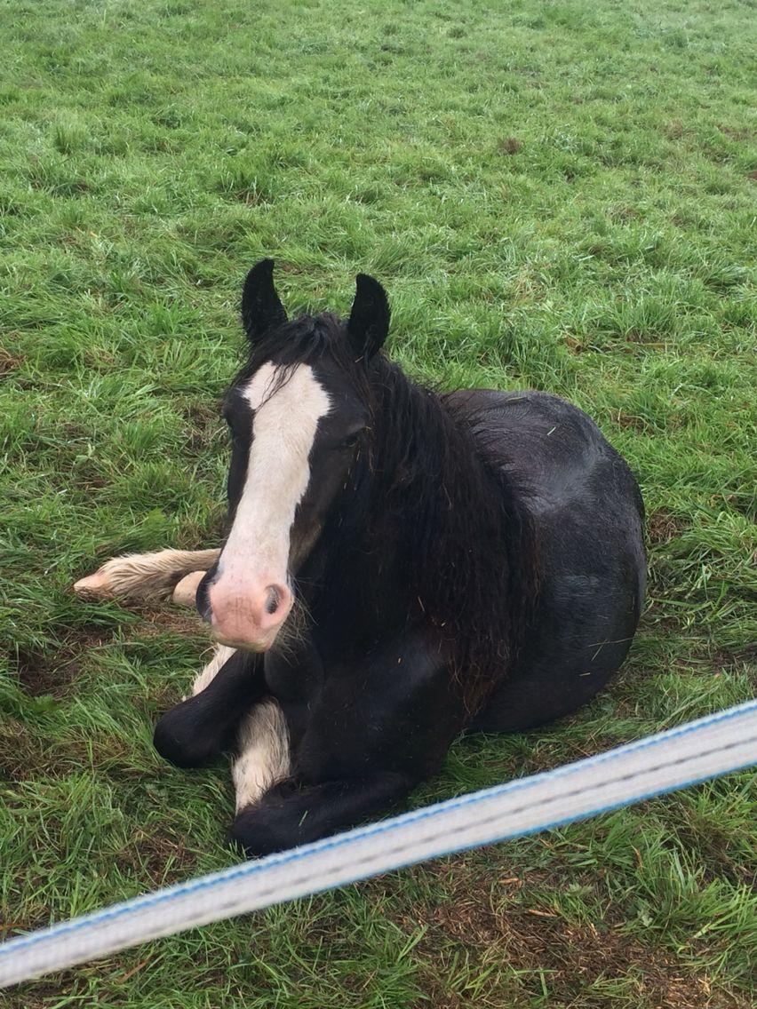 Pin by Emily Hughes on My horses Animals, Horses, Cow
