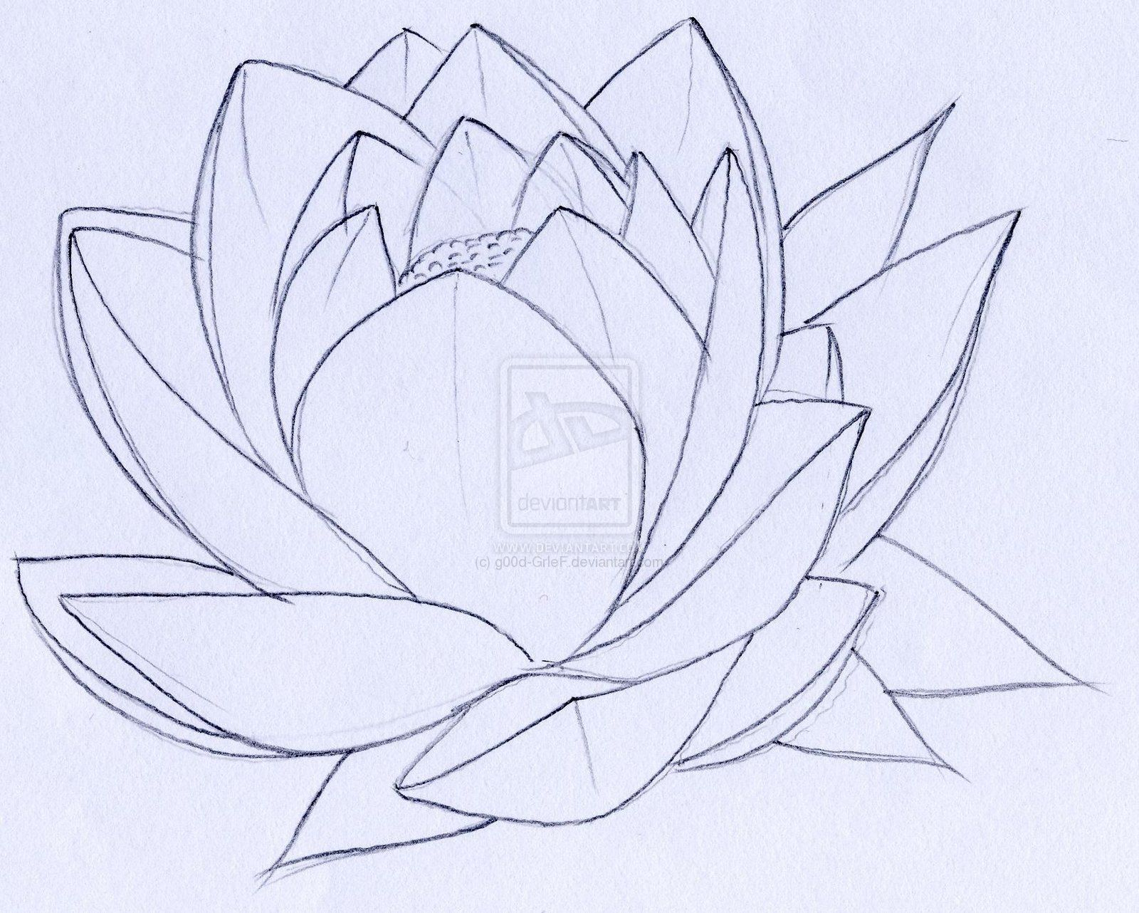 Simple Lotus Tattoo Drawing Drawings Pinterest Lotus