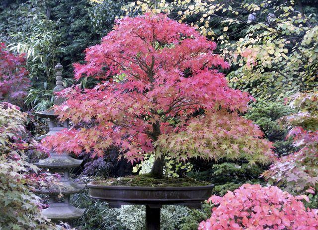 Jardin Japonais Les Plantes Et Arbres Pour Un Jardin Zen