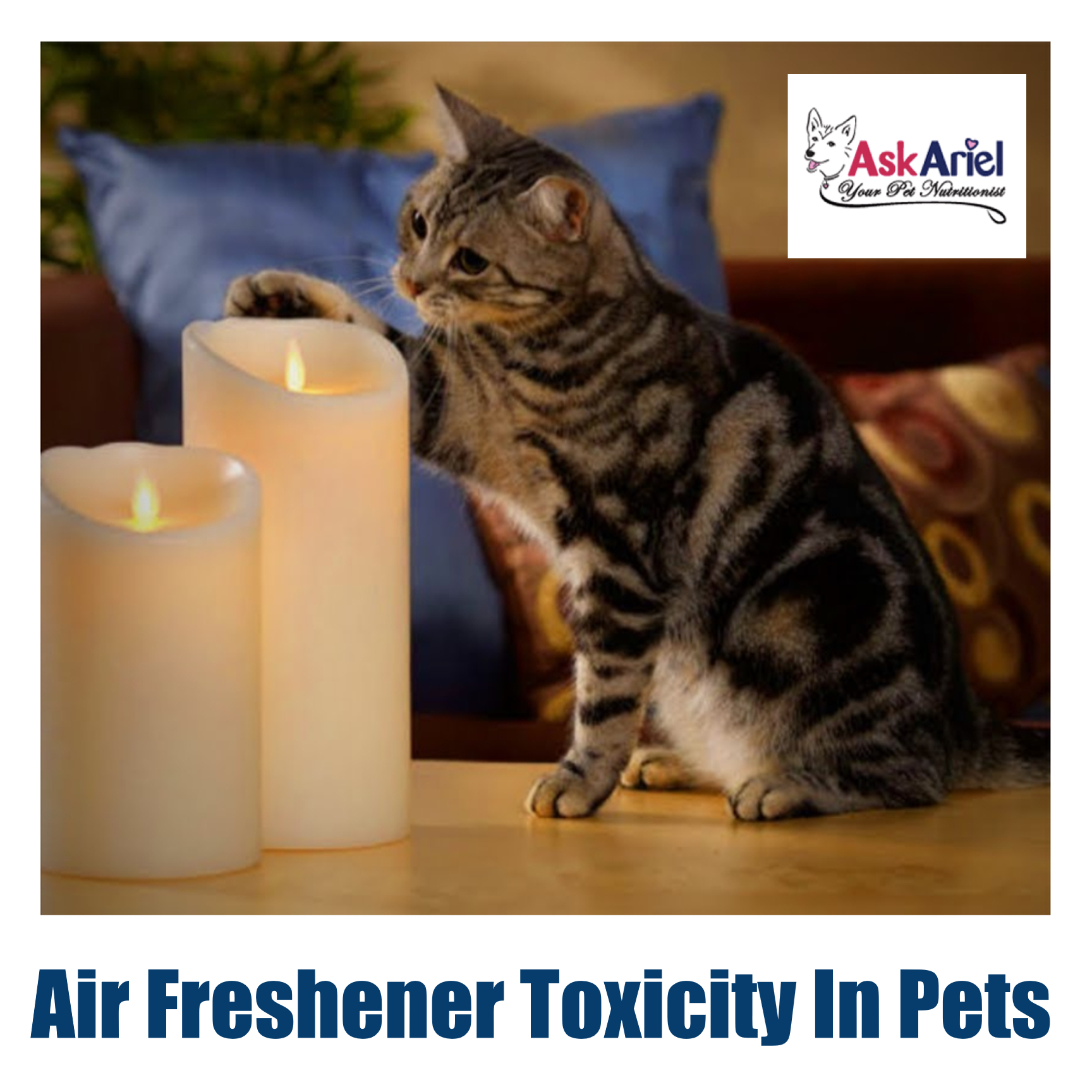 Air Freshener Toxicity In Pets Airborne Toxins With Cats Dogs Air Airborne Cats Dogs Freshener Pets Toxicity Toxins In 2020 Air Freshener Pets Your Pet