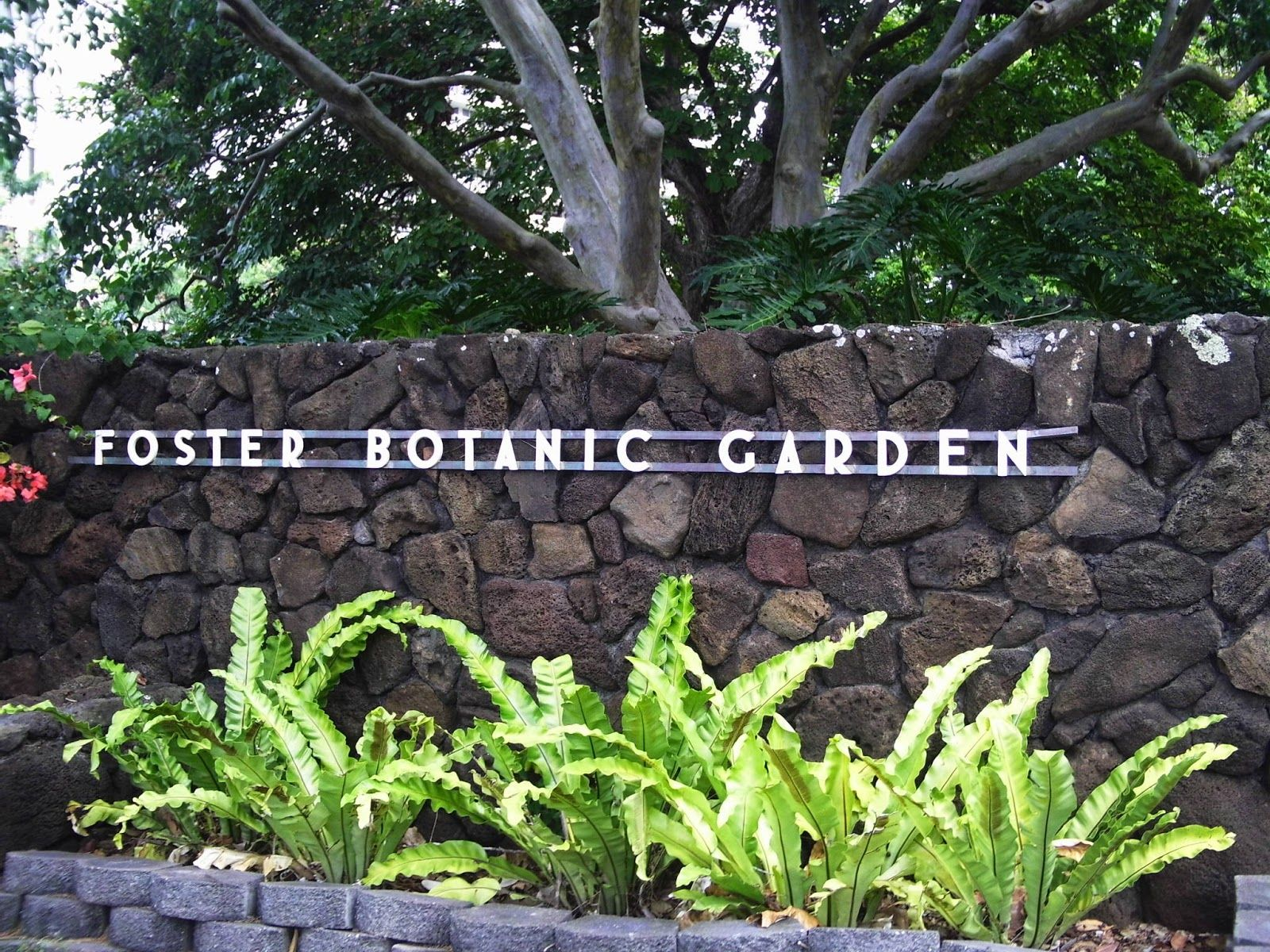 Foster Botanical Garden Is The Oldest Botanical Garden In Hawaii And Sit In A Honolulu Urban