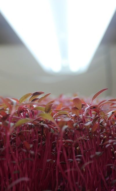 About Southern City Farm - Microgreens | New Orleans