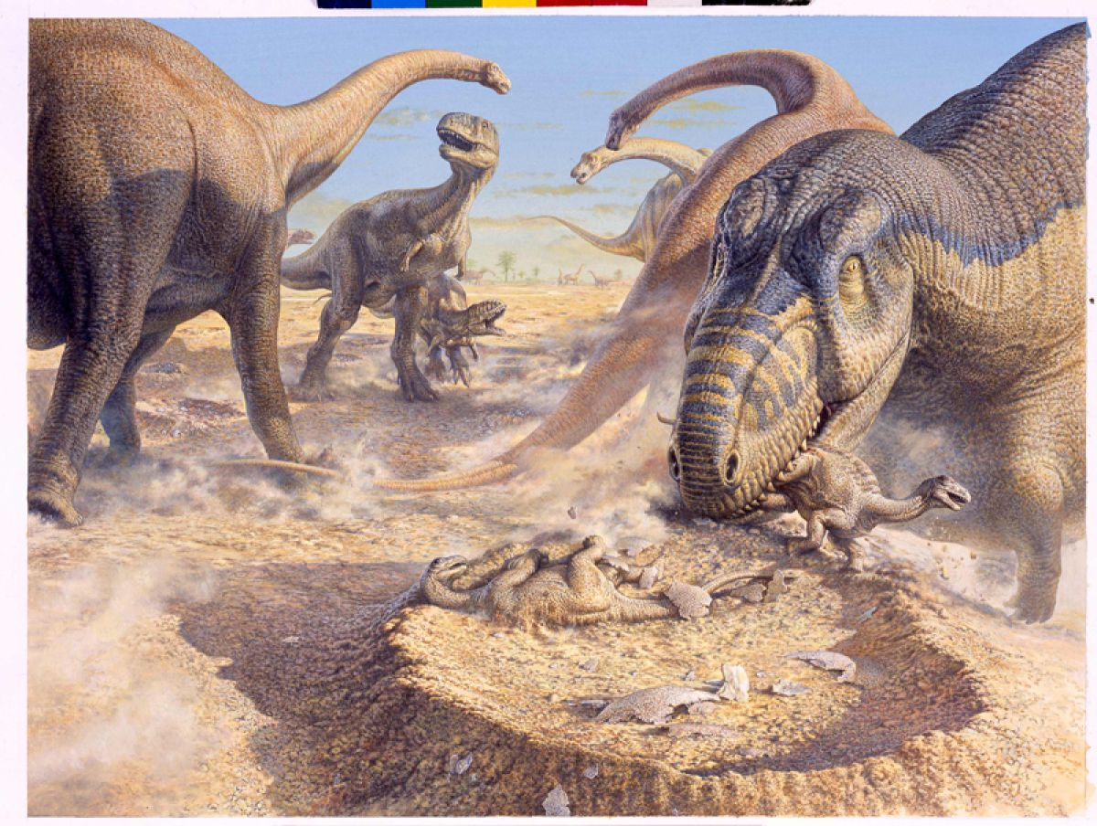 Aucasaurus Attacking Titanosaur Nests  During the Late Cretaceous (85 million years ago) Aucasaurus, a pack-hunting dinosaur, attacks a group of startled titanosaurs in Argentina. Pushing past the adults guarding their nests, the Aucasauruses snap up the babies as they hatch.