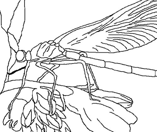 Dragonfly On Flower Coloring Pages