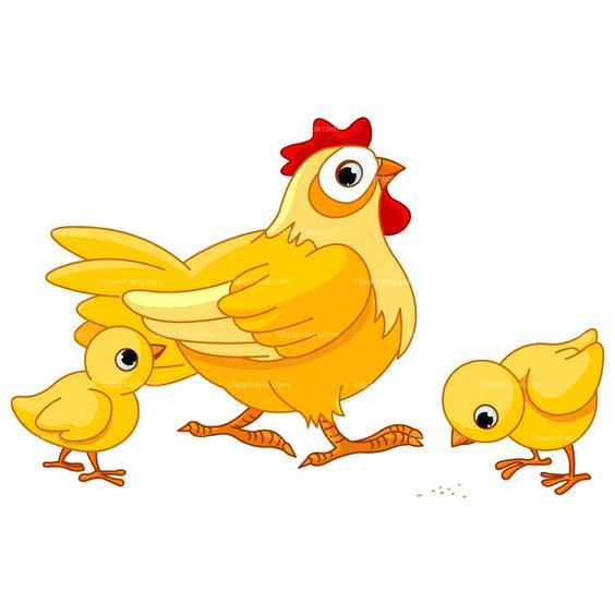 cartoon chicken clip art clipart chicken farm royalty free rh pinterest co uk free chicken clipart graphics free clipart chicken wings