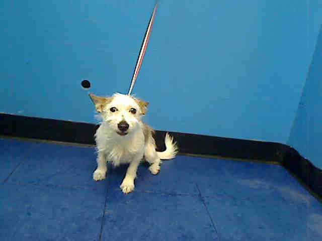 NY ACC. Julie. Manhattan ACC. Petfinder.com is the world\'s largest ...