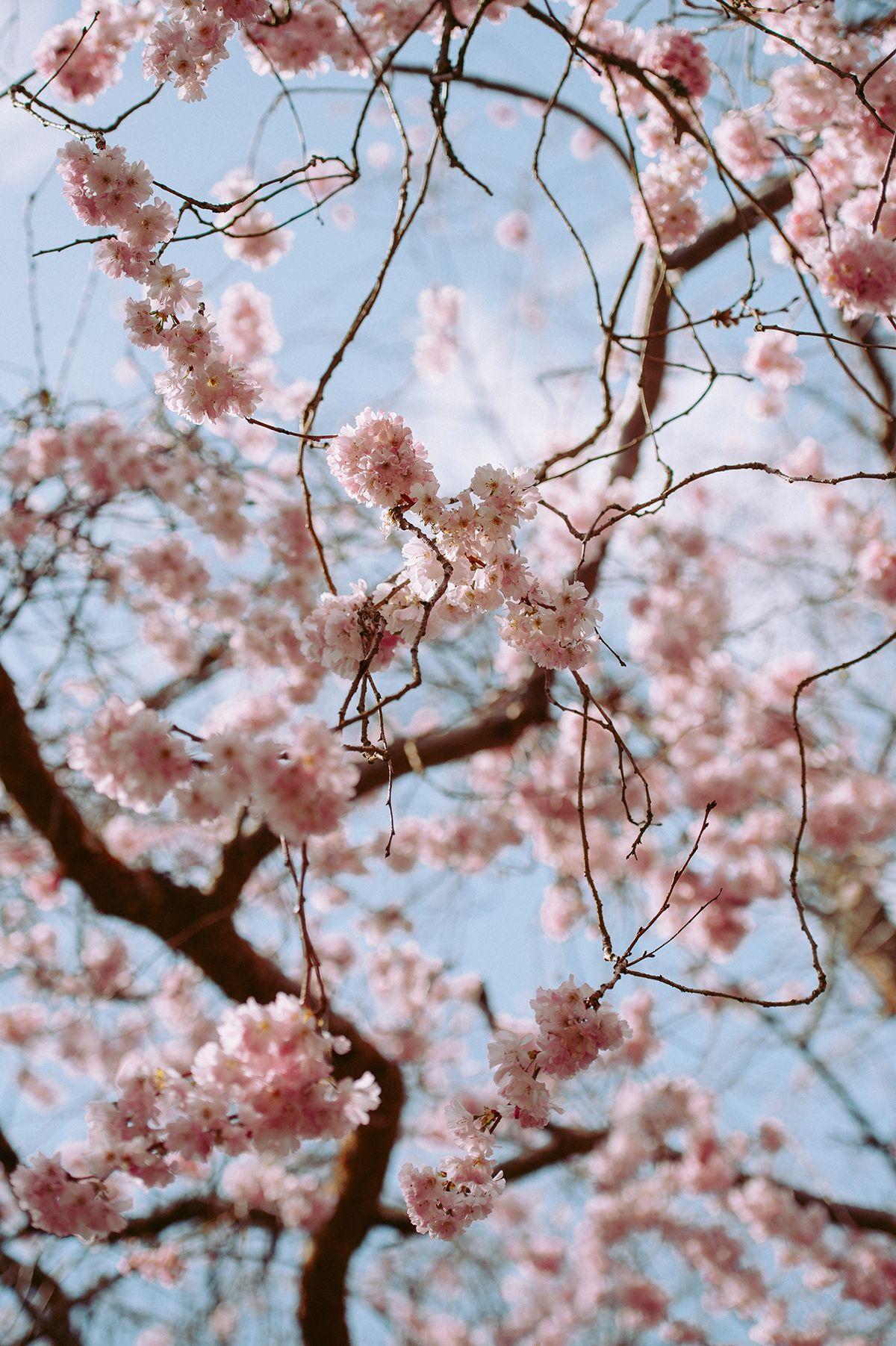 Spring Bucket List Hintergrundbilder Fruhling Fruhling Hintergrunde Fruhling Wallpaper