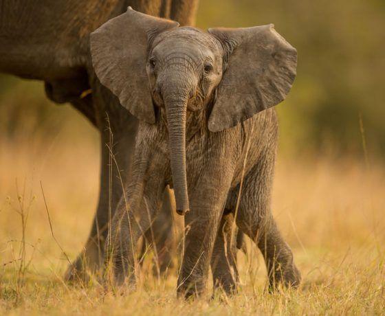Singita Pamushana Lodge #zimbabwe | Elephant images ...