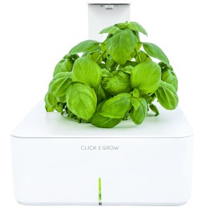 The Countertop Herb Garden Fresh Healthy Herbs At Your 400 x 300