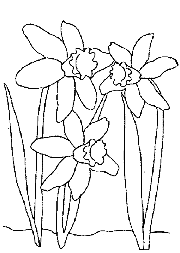 Wiosenne Kwiaty Szablony Szukaj W Google Coloring Pages Free Printable Coloring Pages Flower Coloring Pages