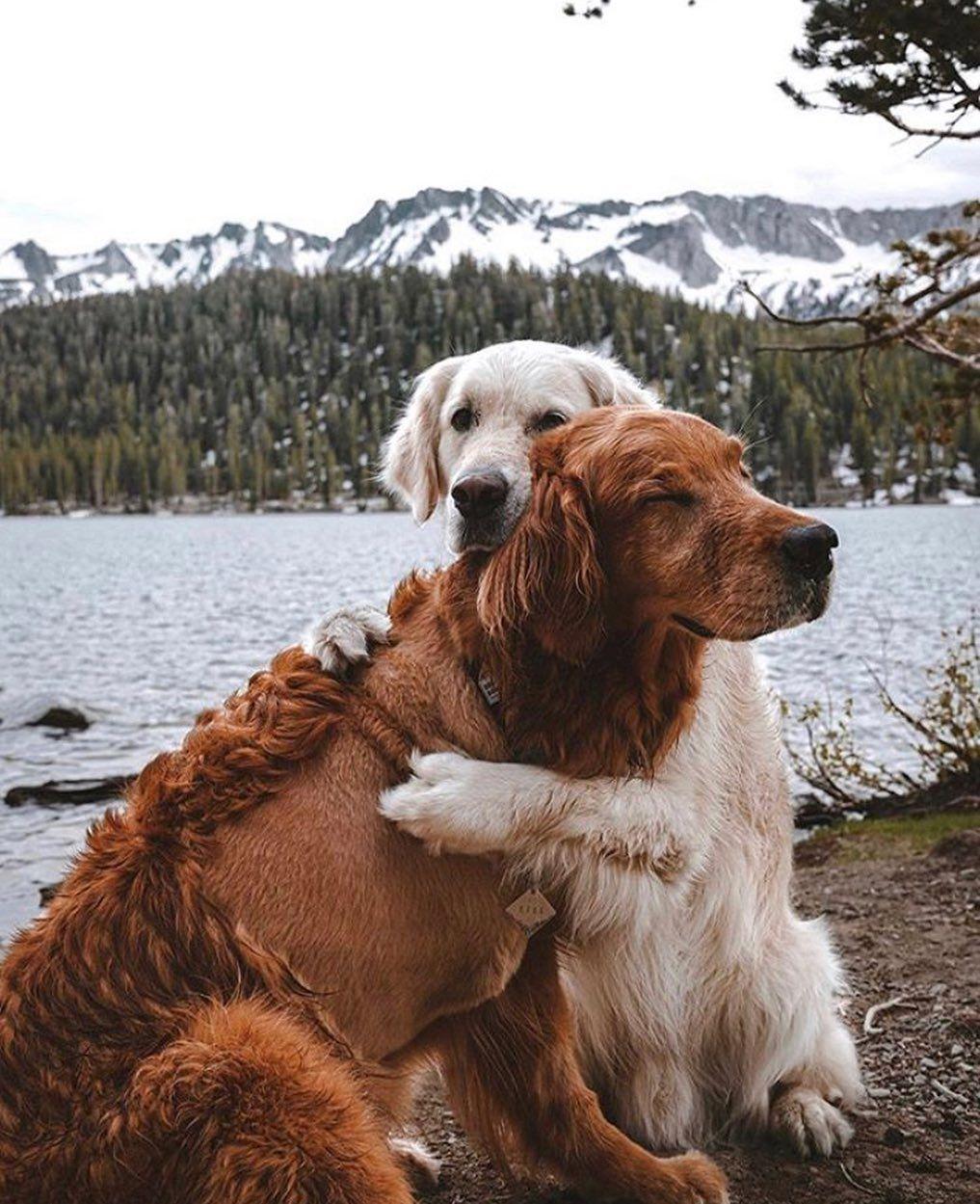Photo of ¿Cómo educar adecuadamente a su cachorro paso a paso mes a mes? Tú deseas …