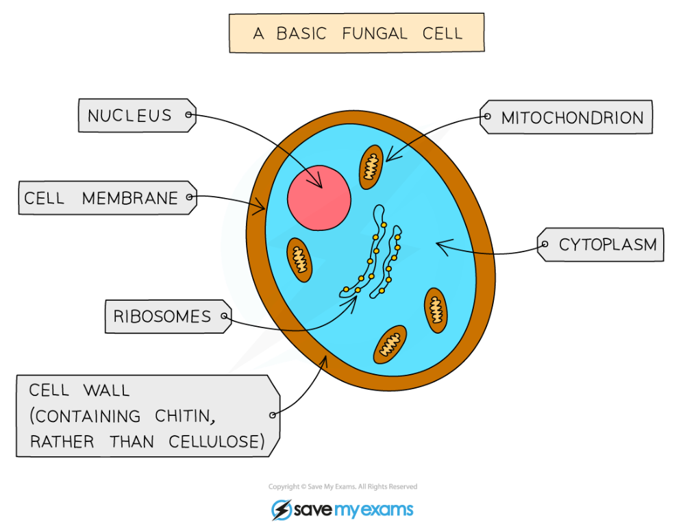 Features of Organisms | CIE IGCSE Biology Revision Notes ...