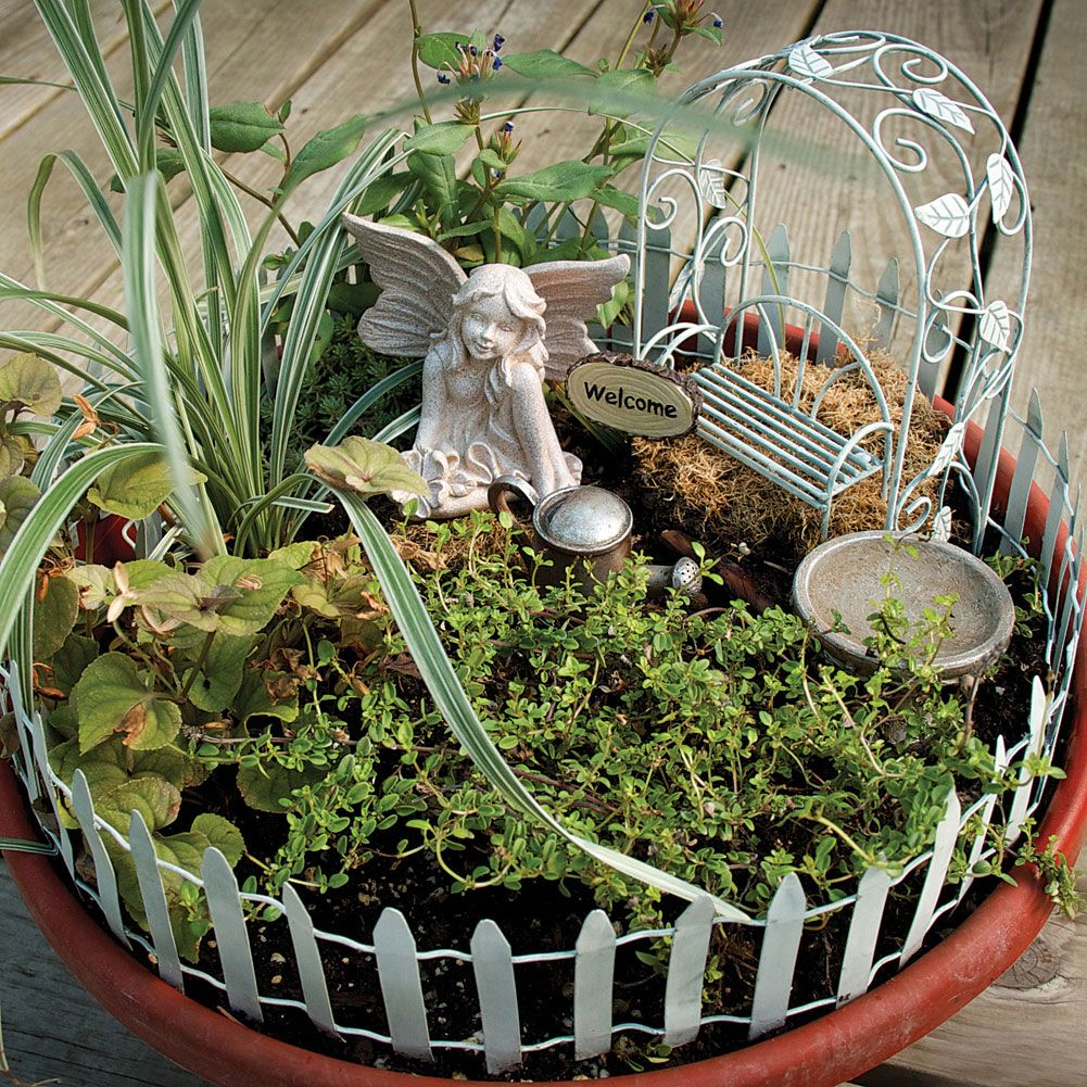 Mixed Indoor Plants In Small Container | Transform Any Planter, Pot, Dish  Garden,