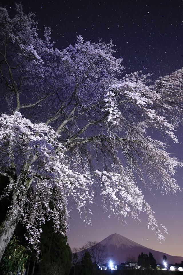 Lifeisverybeautiful Cherry Blossom Japan Nature Beautiful Nature