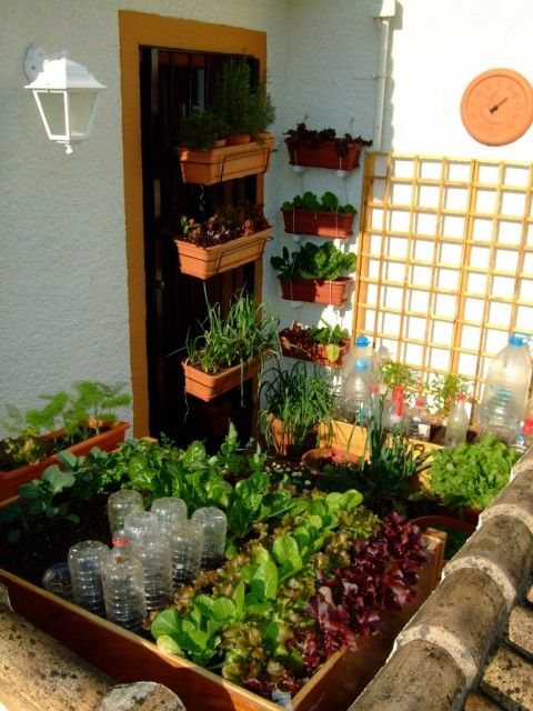 This tiny balcony vegetable garden only uses 3 square for Terrace kitchen garden ideas