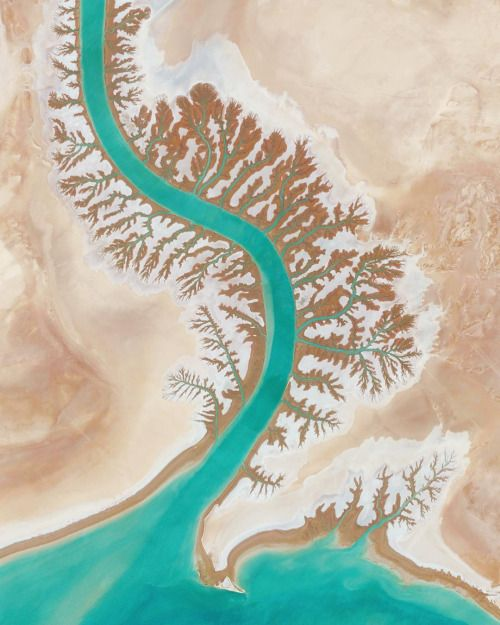 "deliciousdimension:  ""Leaf-like impressions are seen on the shore of Musa Bay, near the Shadegan Wildlife Refuge in Iran.  Source imagery: @digitalglobe by dailyoverview  """