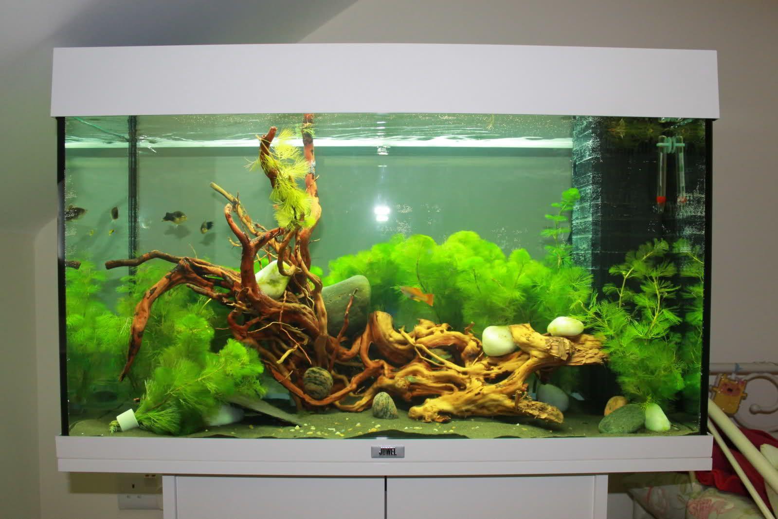 posted image aquarium bay pinterest. Black Bedroom Furniture Sets. Home Design Ideas
