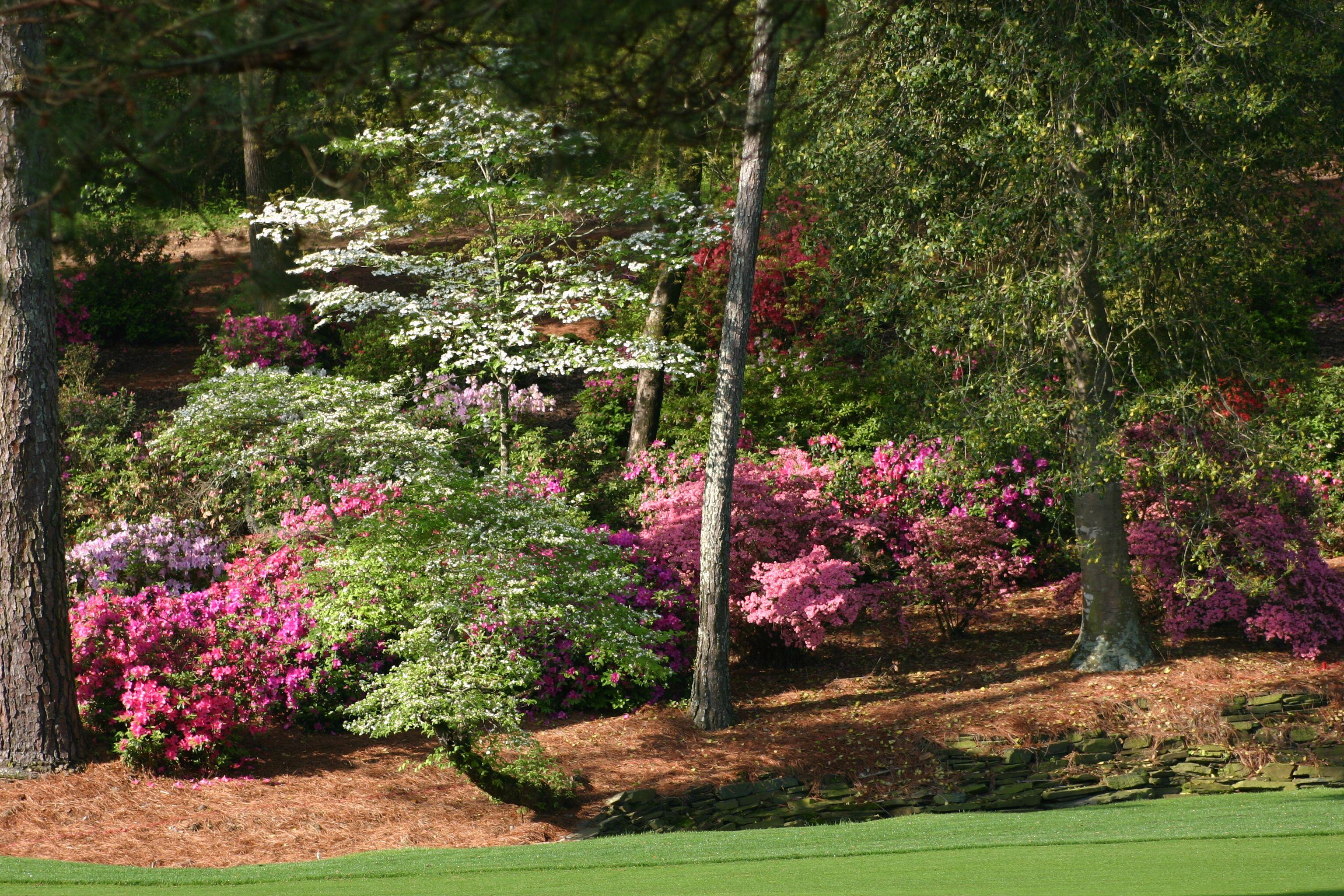 Augusta National Backyard landscaping, Flowering trees