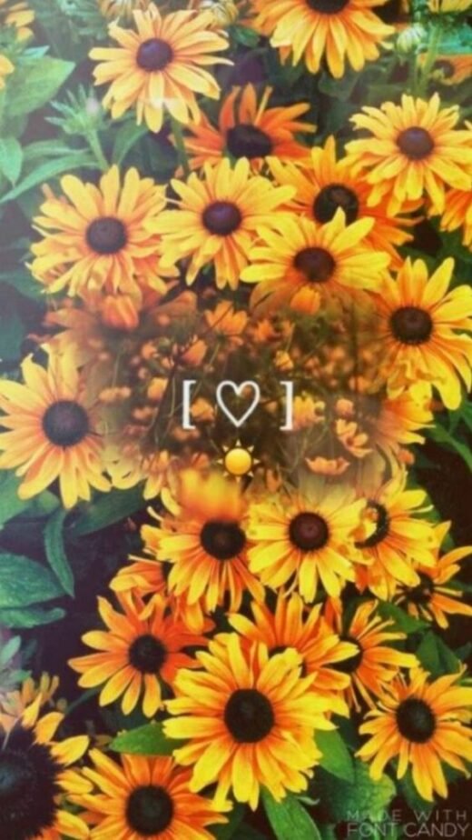 50 Sunflower Wallpapers That Will Warm Your Heart 247day In 2020 Sunflower Wallpaper Flower Wallpaper Locked Wallpaper