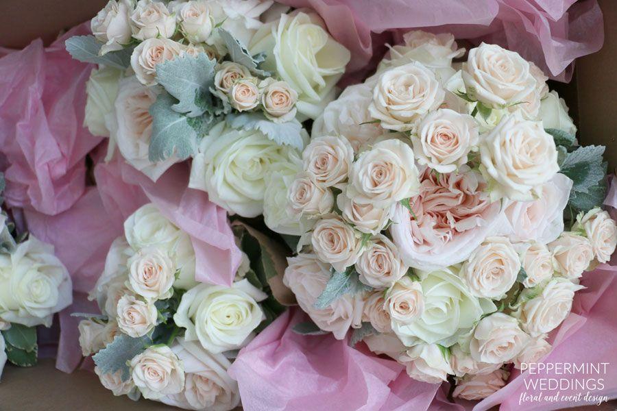 white and peach \ white roses, peach garden roses, white o'hara