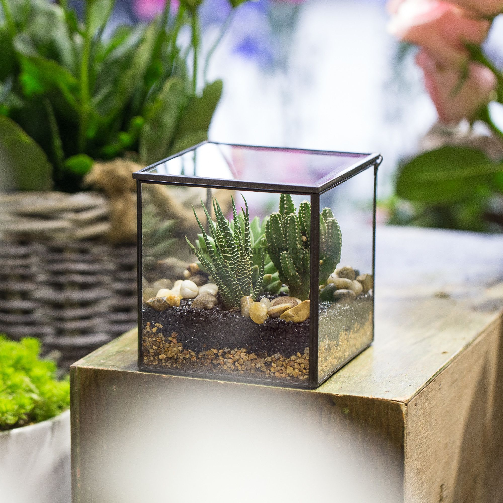 Small Square Clear Glass Geometric Terrarium Box Succulent Fern Moss