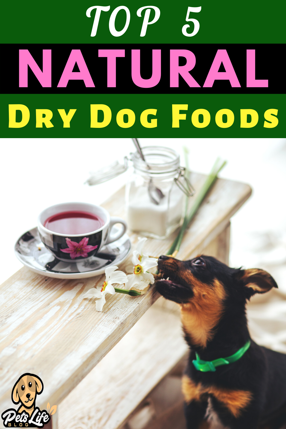 Top 5 Natural Dry Dog Foods in 2020 Dry dog food, Dog