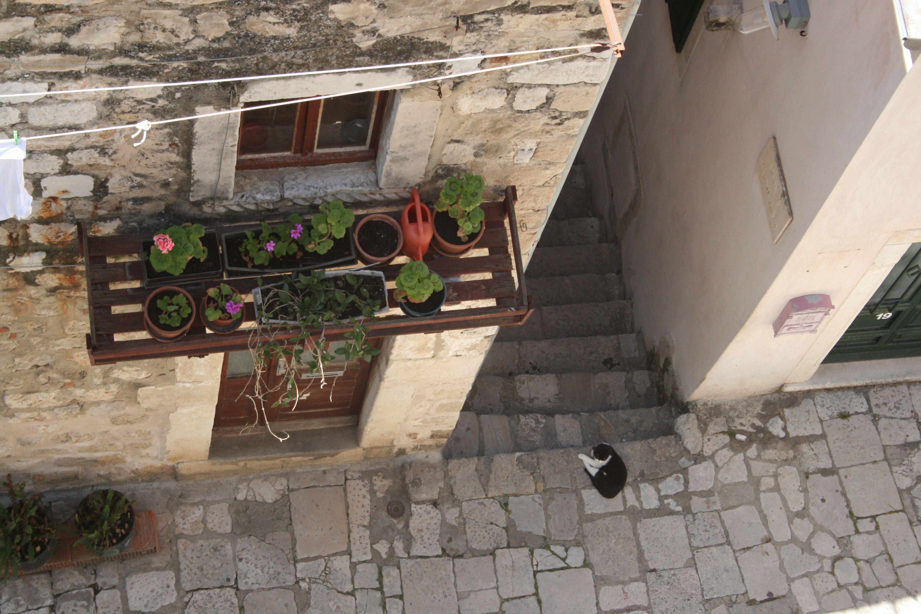 Kissa ottaa rennosti kuumana kesäpäivänä. A cat relaxing in the old town alley. #Dubrovnik