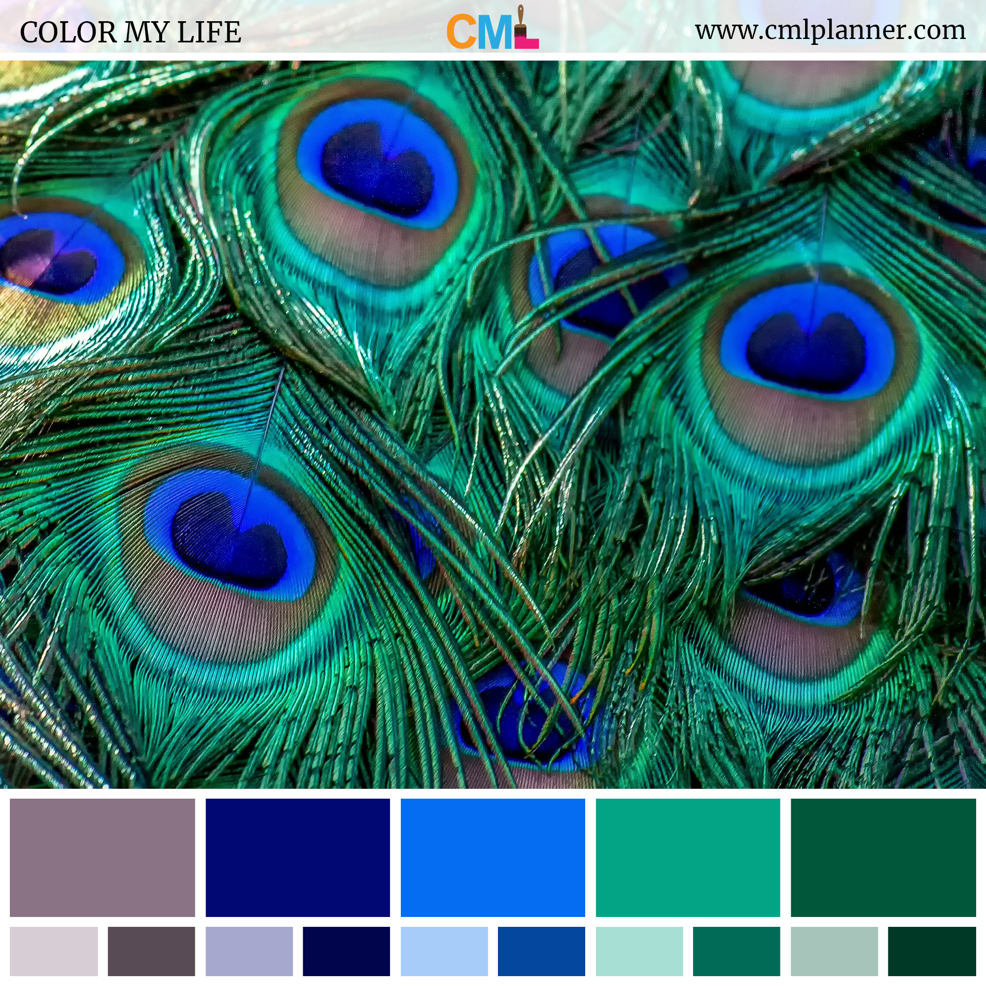 Color Palette Color Inspiration from