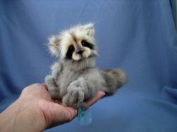 Mink Racoon.  So adorable!