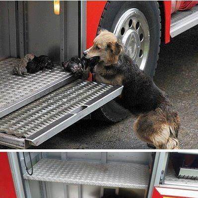 Pin By Whit Gill On Love My Dogs Puppies Rescue Dogs Dogs