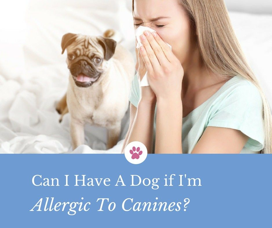 Can I Have A Dog If I'm Allergic To Canines