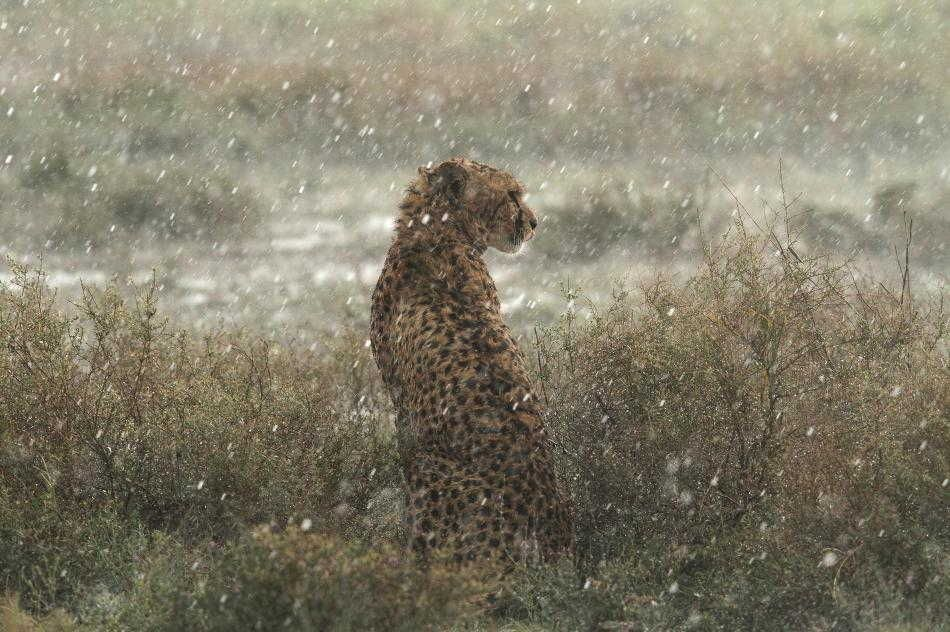 Image result for rainy day at animal kingdom