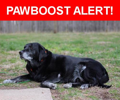 Please spread the word! Boiler was last seen in Evansville, IN 47715.    Nearest Address: Near Wilson Sq & Plaza Dr