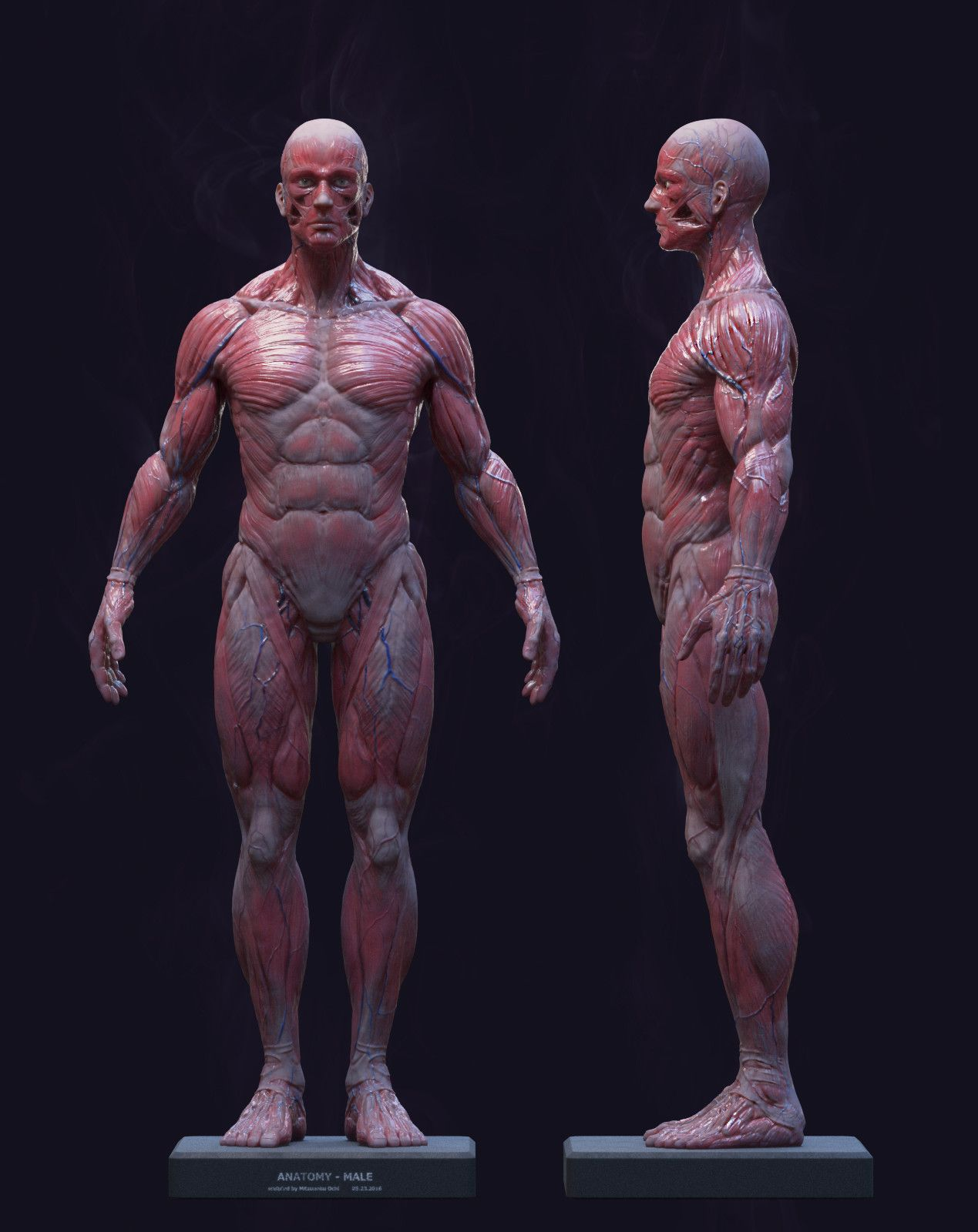 HumanAnatomyMale, Ochi Mitsunobu on ArtStation at https://www ...