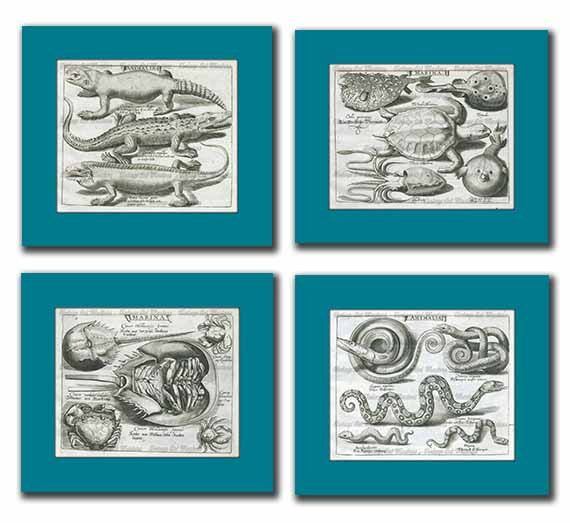 Vintage Lizzard Reptile Illustrations  by VintageArtMasters