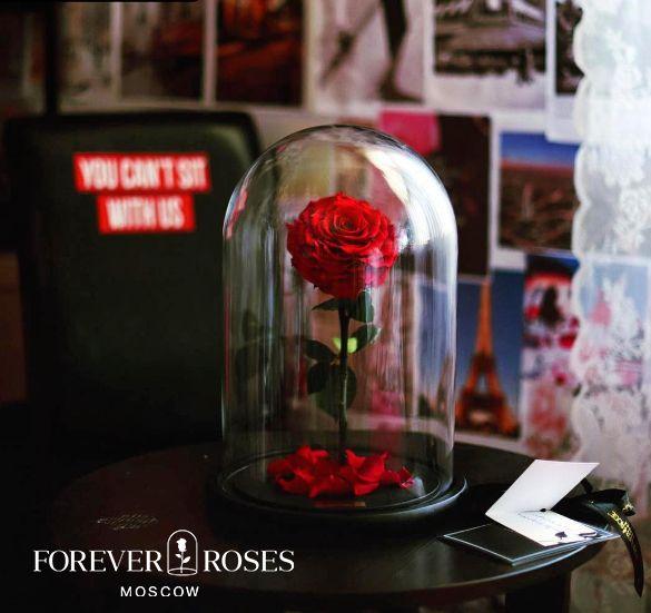 Розы не требует ухода 🍀Не требует полива🌬 🍀Гарантия 3 года ...