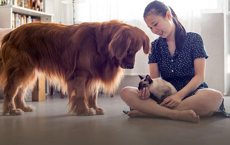 Best Pet Insurance For Covering Injuries Illness Trupanion Cat Illnesses Pet Care Logo Sick Pets
