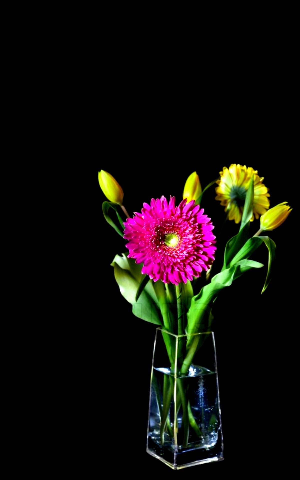 Tulipanes u flower black background pinterest black backgrounds