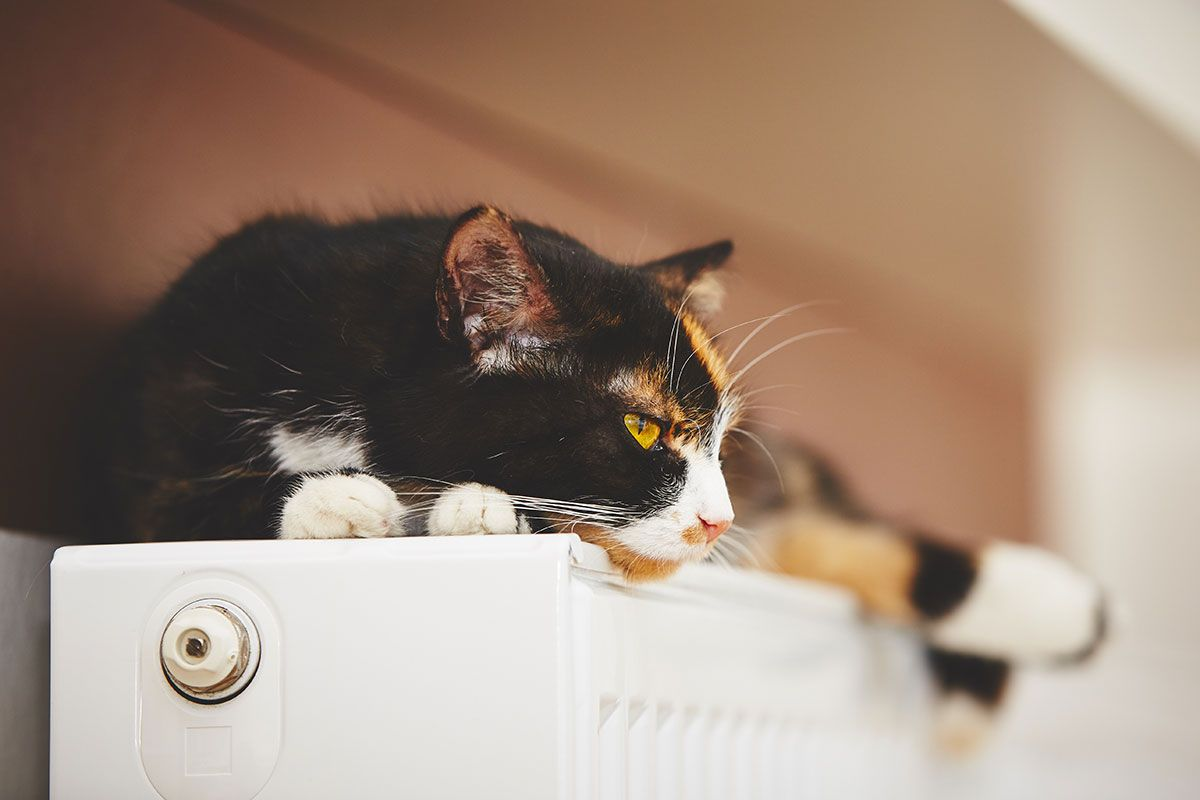 Cat Fever How To Tell If It Happens To Your Kittens Cat Fever Kitten Pawsometalk Cats Kittens Cats Eye Stone