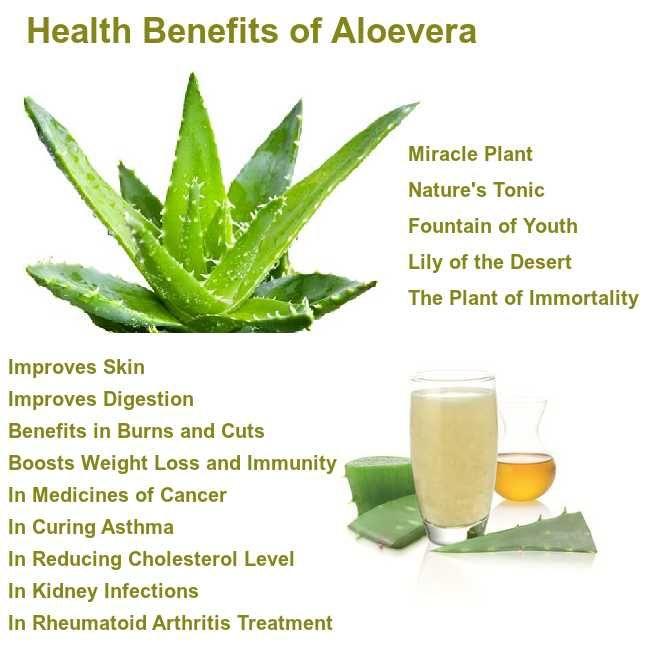 Benefits Of Aloe Vera Aloevera Benefits Steadyrun