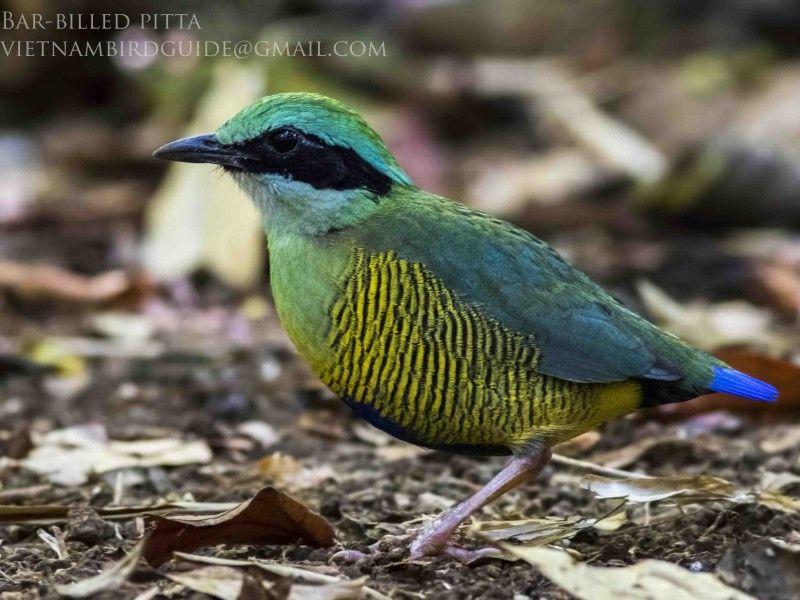 Cat Tien national park & Dalat bird photography tours 8 days