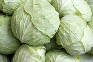 Health Benefits of Cabbage.
