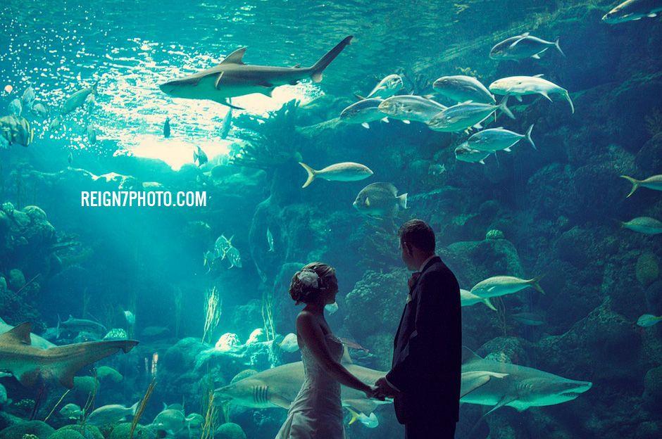 Florida Aquarium Wedding Most Likely Our Venue July 10
