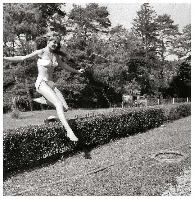 jump over fence bush  hop